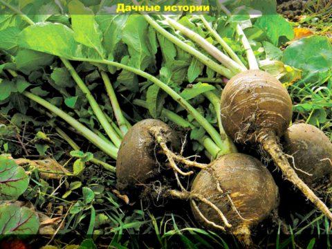 1 result 480x360 - Растения которые лучше сажать в июне для получения обильного урожая