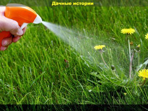 62 result 480x360 - Безопасные гербициды. Правда или обман и уловки производителей