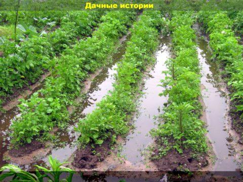 16 result 480x360 - Зарядили ливни. Спасаем огород и посадки на даче после сильных дождей