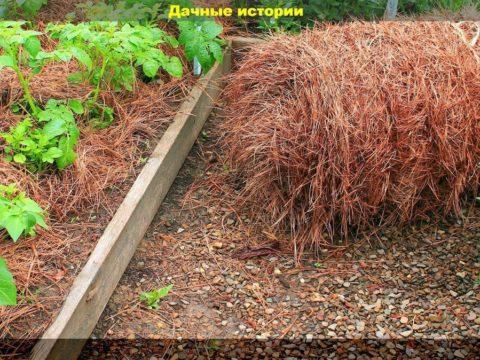 scale 1200 4 480x360 - Как превратить солому в богатый урожай. Обычная солома поможет дачнику и превратит землю в идеальную